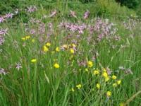 Picture 2 - Grasses